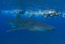 Te koop: duiksafaribedrijf in de Malediven