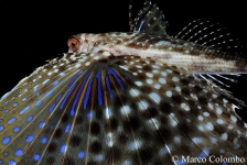 Marco Colombo – Slow Diving op Nature Talks