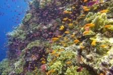 Reportagewedstrijd – Een explosie van zachte koralen in Fiji