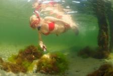 Wie worden de kampioenen Onderwaterfoto- en videografie 2016?