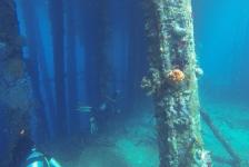 Niels Hartogsveld- Wonen en duiken op Curaçao!