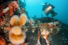 Nieuw leefgebied bodemdieren op oude gasplatforms in de Noordzee