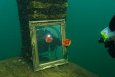 Dit zijn ze – de winnaars van het eerste Limburgs Kampioenschap Onderwaterfotografie