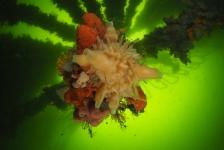 ONK Onderwaterfotografie 2018 – Masters – Groothoek