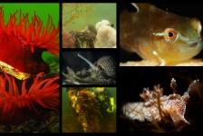 Kom naar bekendmaking Nederlandse en Zeeuwse kampioenen Onderwaterfotografie en -video