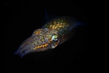 ONK Onderwaterfotografie 2018 – Masters – Macro