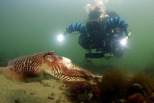 ONK Onderwaterfotografie 2018 – Starters – Beste foto