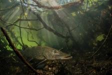 ONK Onderwaterfotografie 2018 – Zoet water
