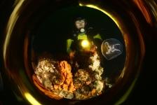 ONK Onderwaterfotografie 2019 – Masters – Groothoek met model