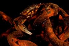 ONK Onderwaterfotografie 2019 – Masters – Mens en Natuur