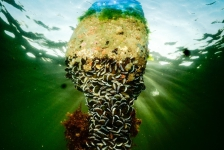 ONK Onderwaterfotografie 2019 – Starters – Thema