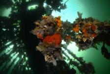 De winnende foto's van het ONK Onderwaterfotografie 2016