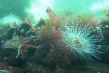 ONK Onderwatervideo 2019 – Koenraad de Vos