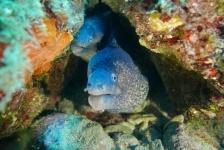 Eric Zetz – Medes: een sprookje onder water