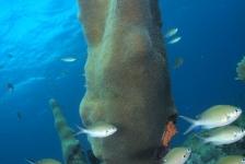 Frank de Bruin – Mangel Halto Reef