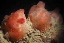 Richard de Kok – Duiken tussen zeeabrikozen