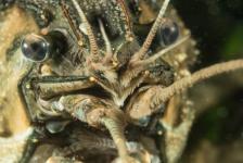 Brenda de Vries – De weg naar onderwaterfotograaf (3)