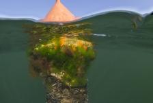 René Weterings – (O)NK onderwaterfotografie 2014, dag 1…!