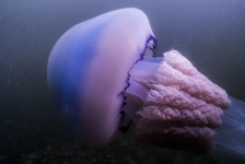 Bas Brand – Zeepaddenstoel