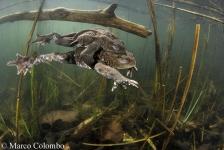 DuikeninBeeld op Nature Talks – een dag vol natuur onder water!