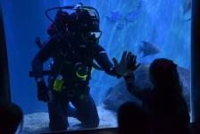 Patrick Van Hoeserlande – The Dive Team