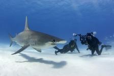 'Naar de haaien' op Duikvaker