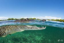 Zoutwaterkrokodil – Het verhaal achter de foto