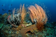 Kom jij naar Diving Holidays op Duikvaker
