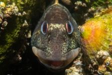 René Weterings – Kiekeboe spelen met steenslijmvisjes