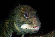 René Weterings – Stoere steenslijmvisjes