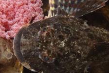 René Weterings – Dreischor Reefballs….zeedonderpad-hotspot van de maand!