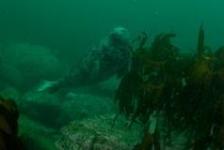 Van zeehond tot slak