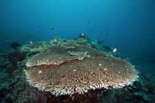 Avonturen op de Noord-Molukken