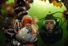 Cursus Onderwaterfotografie Gevorderd – echt iets voor jou!