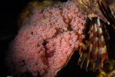 René Weterings – Zeedonderpadden en hun nestjes