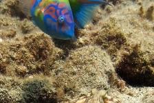 Richard Hoogeboom – Lanzarote: aantrekkelijke duikbestemming?