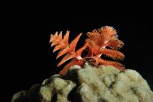Fototips van Ron: kerstboomwormen fotograferen