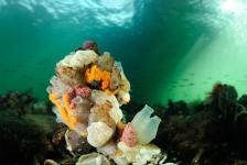 Fototips van Ron: Landschappen onder water fotograferen