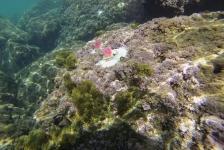 Kunstmatige algen in Middellandse Zee