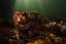 Data ONK Onderwaterfotografie en –videografie 2018 bekend