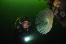 Nature Talks – Onderwaterfoto's vanuit het perspectief van de jury