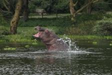 Saskia Uit den Bogaard – Safari boven én onder water in Kenia (3)