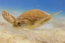 Michael Heus – Schildpad wordt buddy met duiker