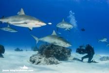 Wildlife Film Festival Rotterdam met veel onderwaterfilms – win nu kaarten!