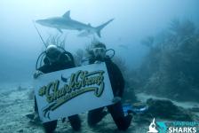 Grote stappen voor de Caribische haaien