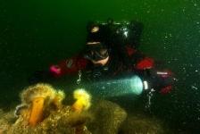 Stans van Hoek – Teamduik/mijn 1200ste duik