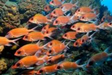 Vissen ruiken vijanden minder goed in verzuurd water