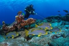 Malediven – 'Weak' current