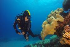 Sverrin Schoonderwoerd – Onvergetelijke duiksafari oostkust Australië