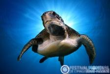 Festival Mondial de l'Image Sous-marine 2014